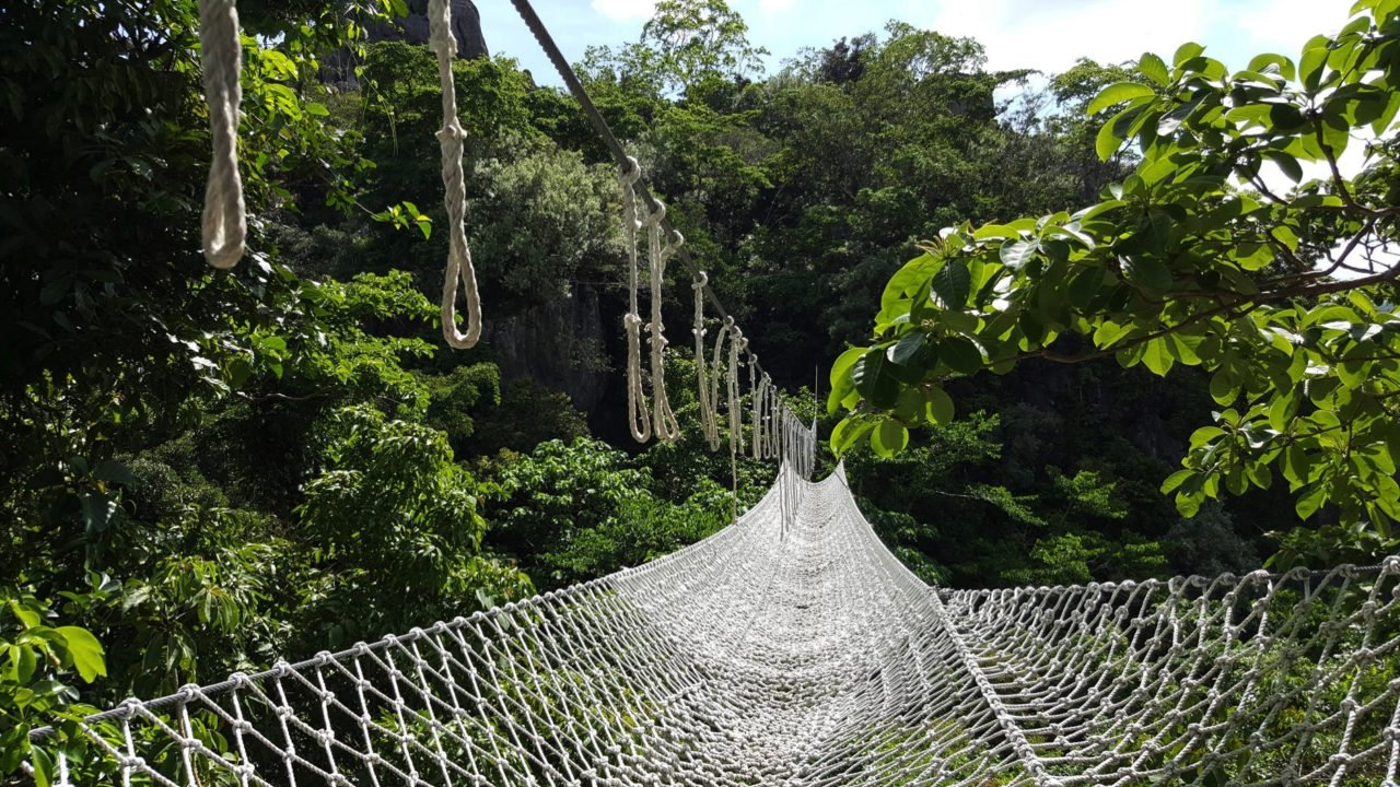 roap bridge through jungle