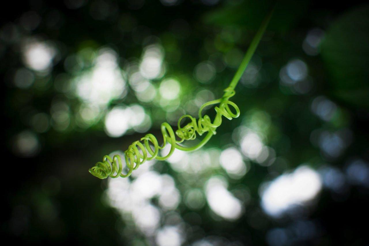 curled plant stem